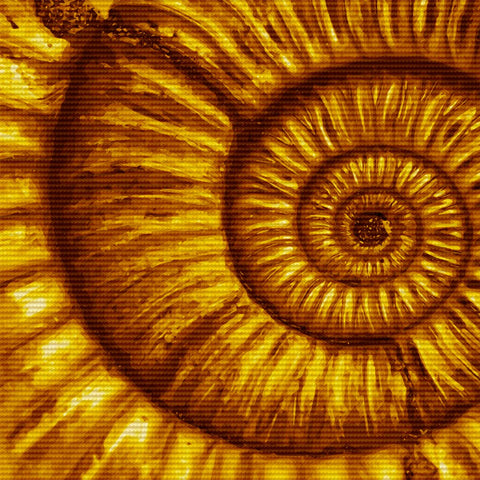 Ammonite Canvas