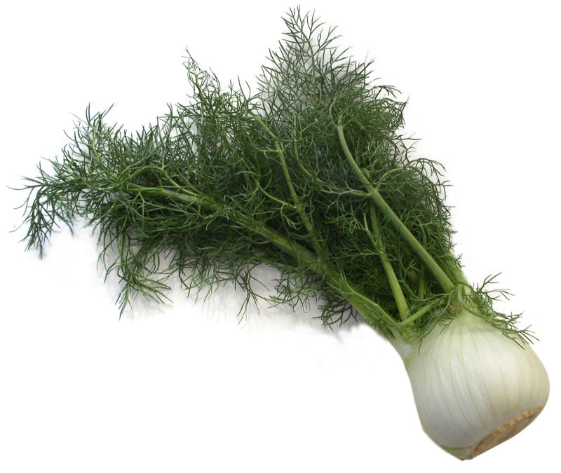 Fennel Bulb - Each