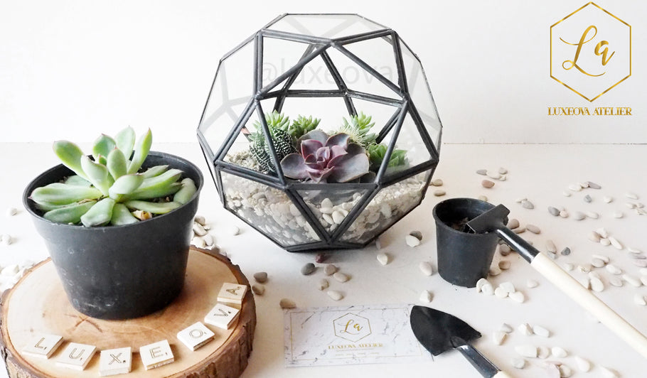 Workshop: Story about Learn How to Create Your Own Aesthetic Terrarium Arrangement in a Geometric Container