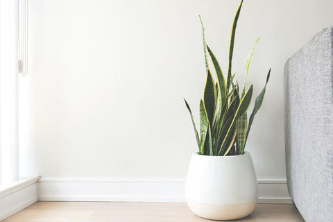 White Ceramic Pot