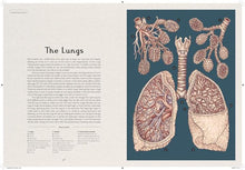 Load image into Gallery viewer, Anatomicum