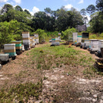 Sponsor a Hive to Help Save the Bees