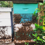 Donate a Hive to Help Save the Bees
