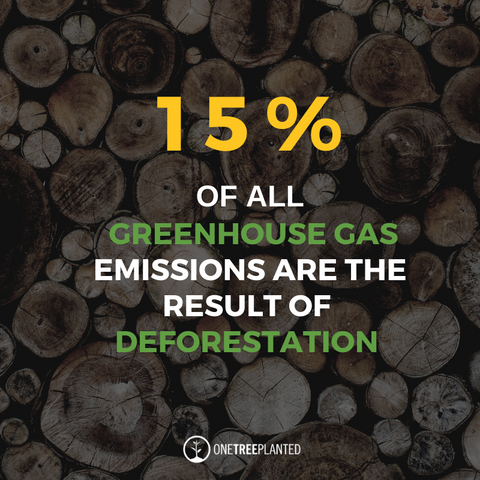 15% of all greenhouse gas emissions are the result of deforestation