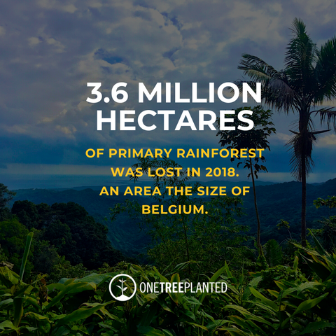 3.6 million hectares of primary rainforest was lost in 2018. An are the size of Belgium