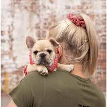 Load image into Gallery viewer, Big & Little Dogs Matching Scrunchies - Cherrylicious - Dog Collars & Leads