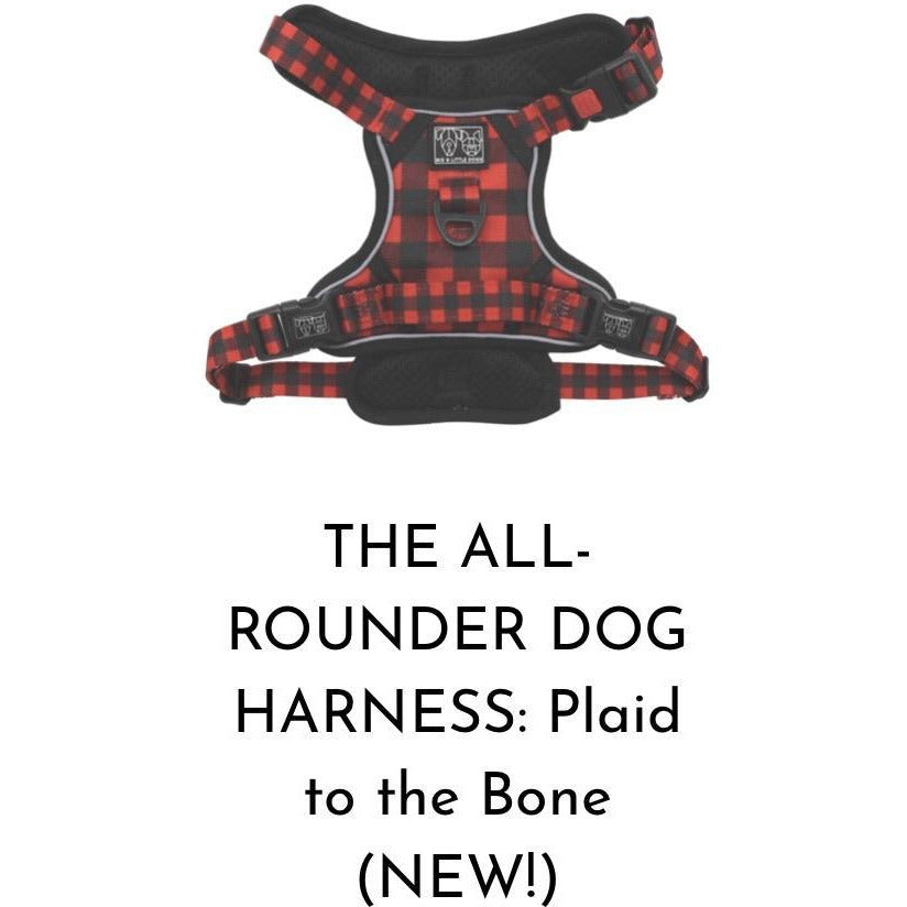 Big & Little Dogs All Rounder Harness