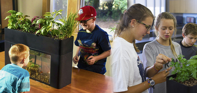 Teaching with Aquaponics | AquaSprouts