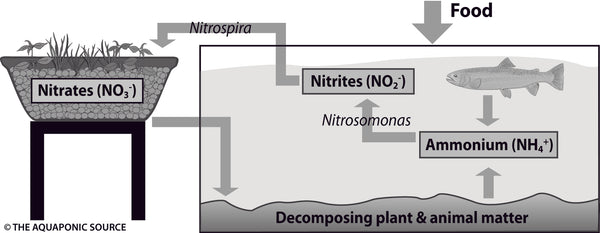 Nitrate Buildup: Too Much of a Good Thing | AquaSprouts