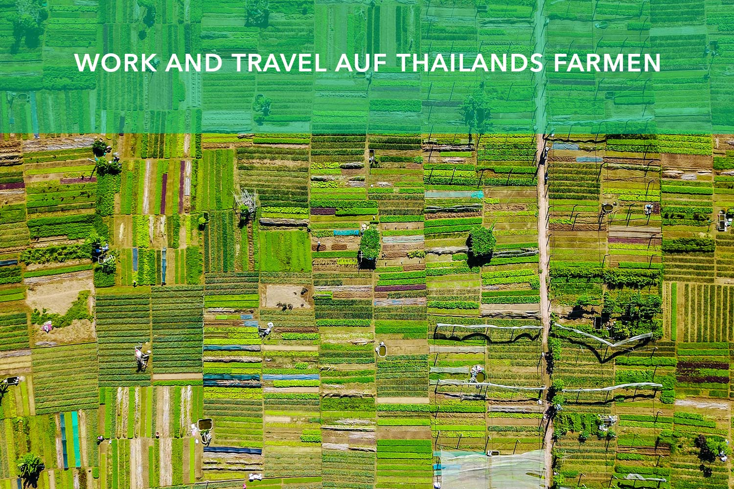 work and travel thailand