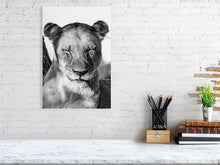 Load image into Gallery viewer, Sleeping Lion