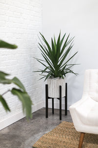 White Planter with Black Stand