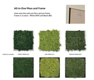 Mini Moss Picture Frames