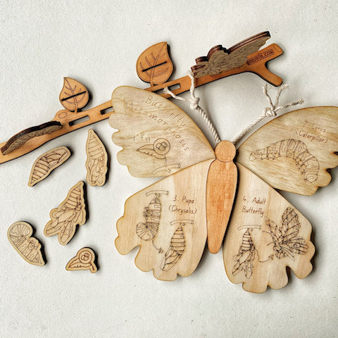 Wooden Butterfly and Metamorphosis (life cycle) Set