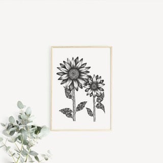 Sunflower Fine Art Illustration : A4, A5 Artwork on 300gsm Premium Rough Tooth Paper
