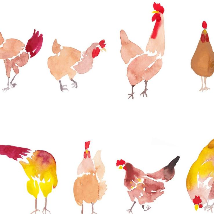 '12 Chooks' — Cute Watercolour Greeting Card