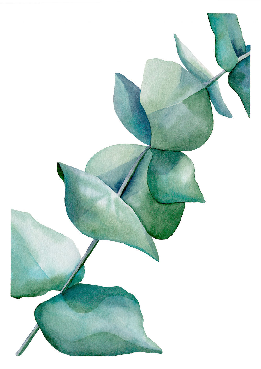 'Silver Dollar Eucalyptus' — Peaceful Greeting Card