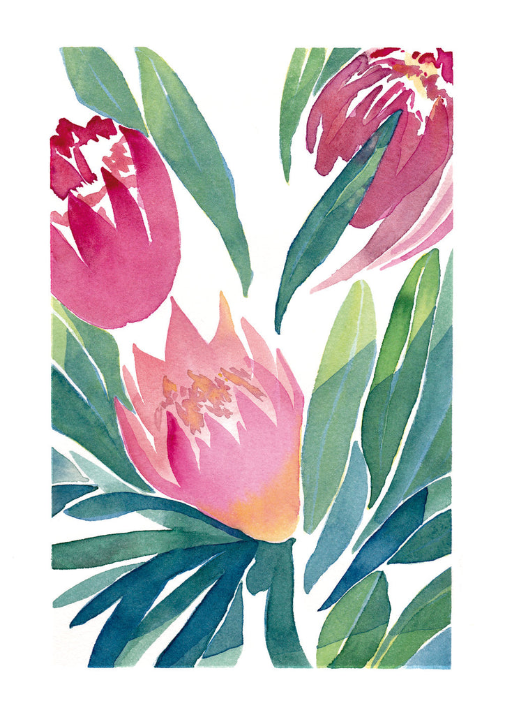 'Winter Protea No.1'  — King Protea Giclée Print