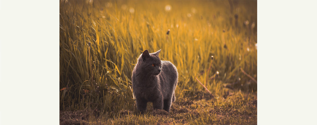 Chat-Errant-Chassant-Herbes_01