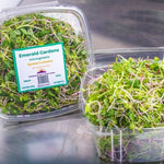 Organically grown Microgreens from Emerald Farms in Bennet Colorado