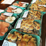 Gourmet Mushrooms from Elevated Mushrooms locally grown in Englewood, CO