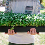 Pea Shoots (3 oz)