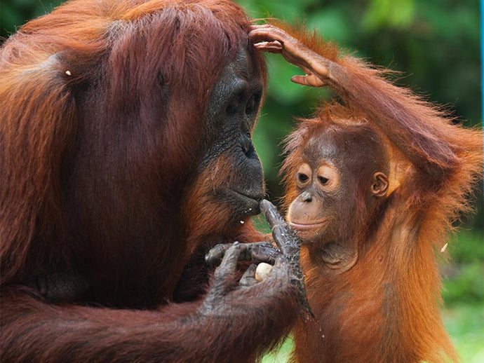 A Guide to Palm Oil and its Environmental Impact