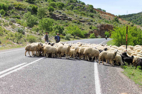 frequent-obstruction-on-the-roads-of-turkey