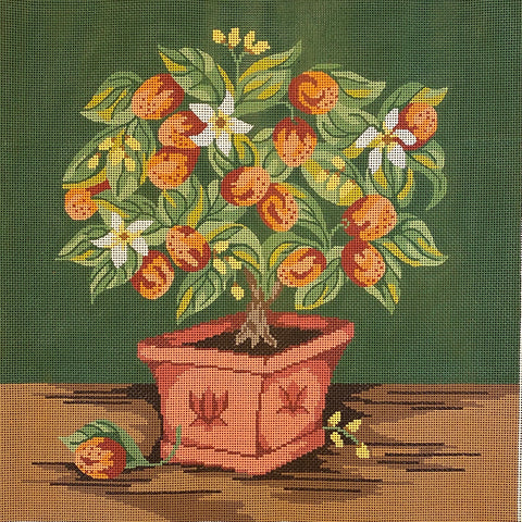 Kumquat Topiary