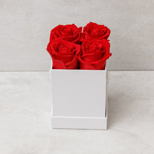 Four Red Roses in White  Box