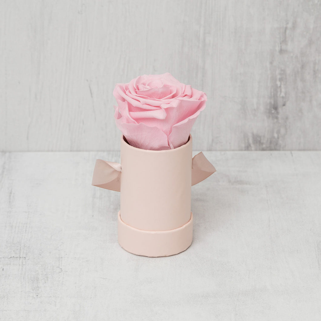 Single Pink Rose in Pink Box