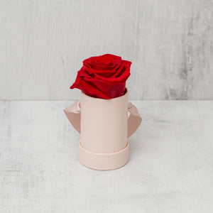 Single Red Rose in Pink Box