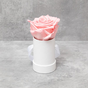 Single Pink Rose in White Box