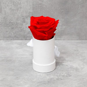 Single Red Rose in White Box