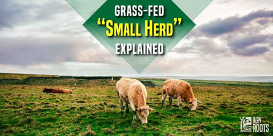 "What Does ""Small Herd"" Mean & Why Does it Matter in Grassfed Whey Protein Isolate? AGN Roots Grass-Fed Whey is Sourced from farms with at most 100 cows (Average 80)"