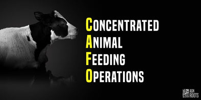 What is a CAFO?