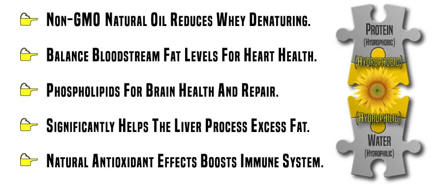 What are the Benefits of Sunflower Lecithin in Whey Protein Powder?