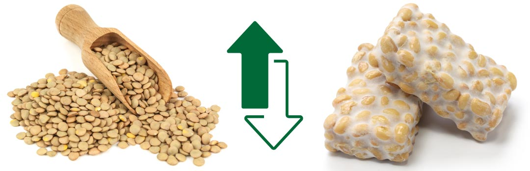 What is the Best Vegan Protein? Lentils & Tempeh  - AGN Roots Grass-Fed Whey