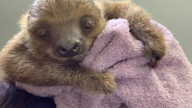 Sloth At Camden's Adventure Aquarium Suddenly Dies