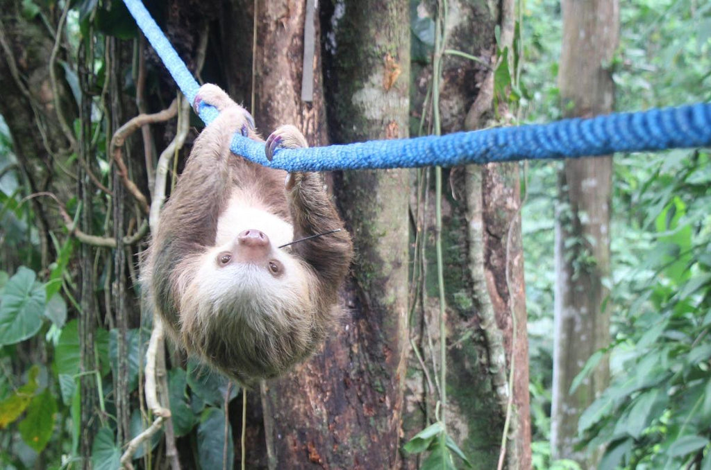 Drusillas Park zoo in Alfriston launches race – for sloths