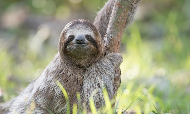Why can't we leave them alone? The troubling truth about selfies with sloths