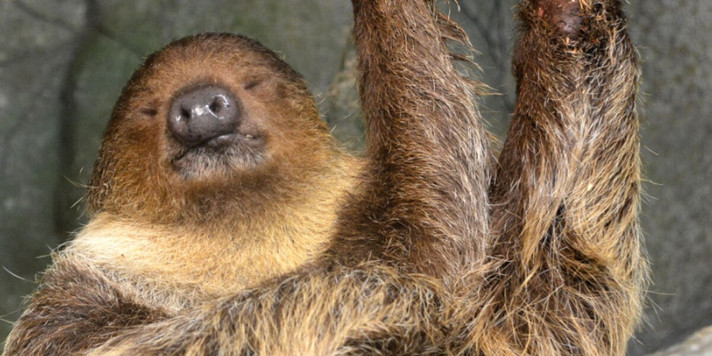 Metro Richmond Zoo opens new sloth exhibit, rain forest habitat