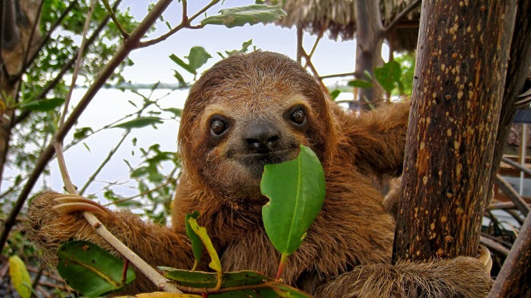10 Fun facts that will make you giggle about Sloths