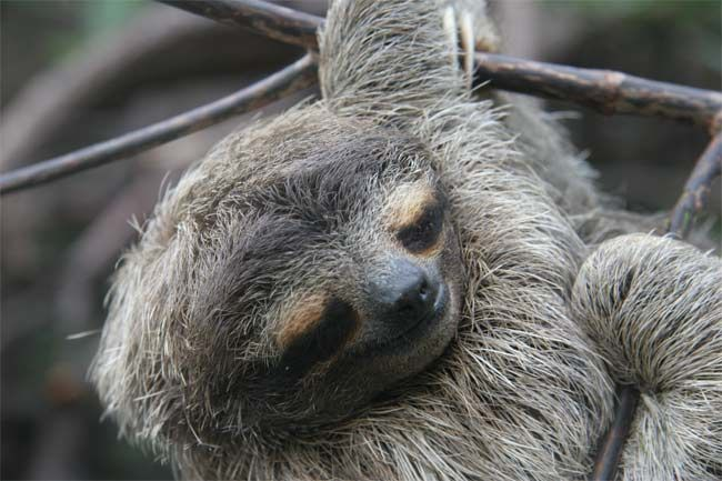 Sloths: The World's Slowest Mammals