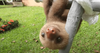 Lonely Planet shares Costa Rican Sloth