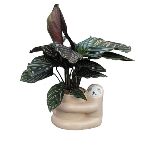 Image of Hugger Sloth Flowerpot - Sloth Gift shop