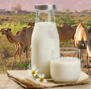Raw Camel milk powder