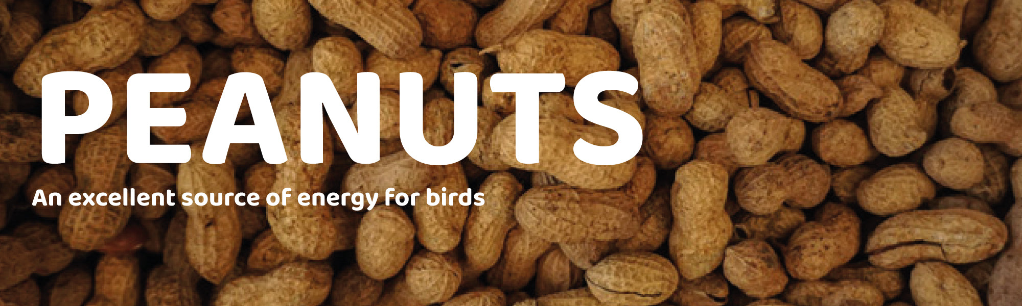 Peanuts an excellent source of energy for birds