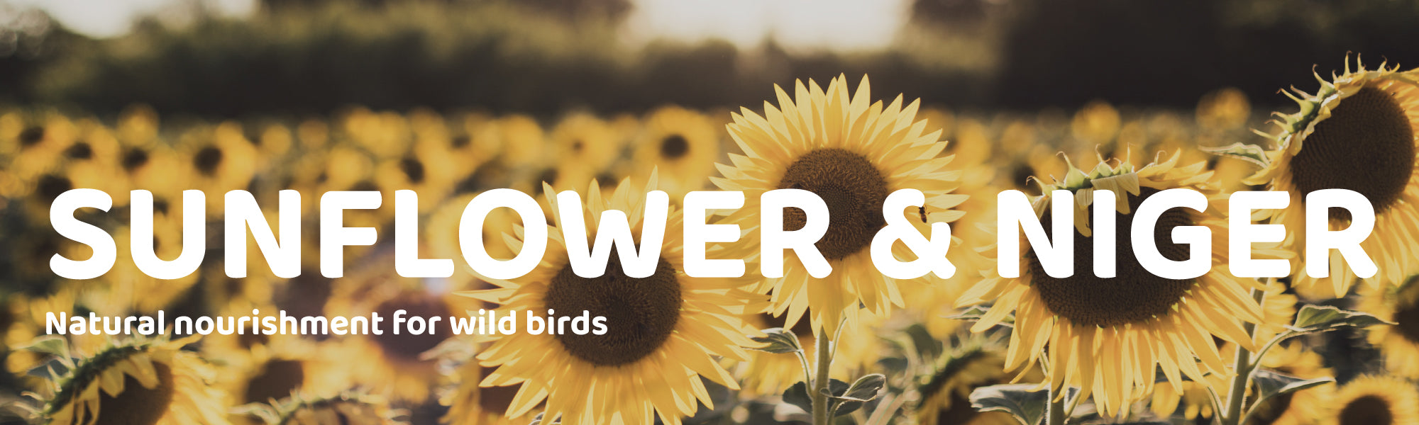 Sunflower & Niger Seed Natural Nourishment for Wild Birds