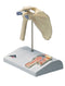 3B Scientific Anatomical Model - mini shoulder joint with cross section of bone on base - Includes 3B Smart Anatomy
